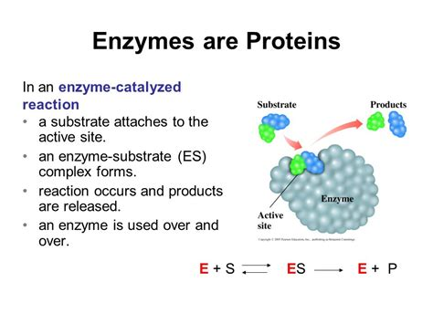 protein enzymes amino acids proteins and enzymes ppt