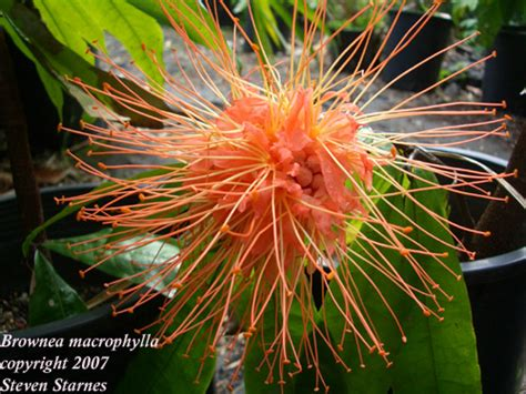 Plants From The Tropical Rainforest - wallpaperew rainforest plants