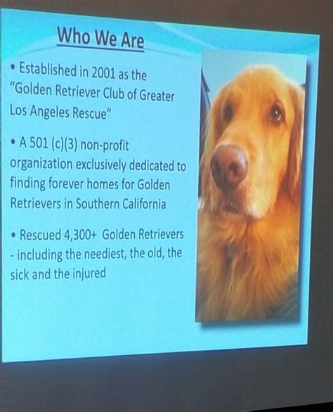 los angeles golden retriever golden retriever club greater los angeles dogs in our photo