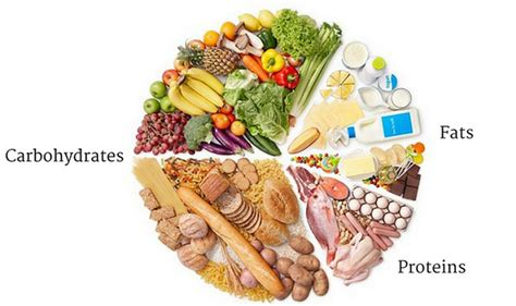 carbohydrates or protein protein carbohydrates fats and calories and how they