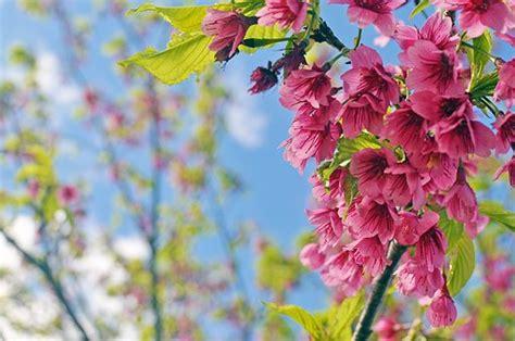 foto con fiori bellissimi bellissimi fiori immagini gratis su pixabay
