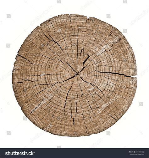 section of wood cross section tree trunk showing growth stock photo