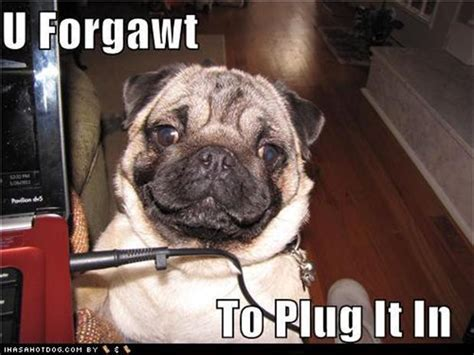pug arthritis pug dogs fixed it images frompo