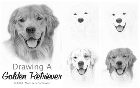 how to draw a golden retriever easy golden retriever drawings