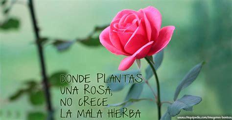 imagenes sorprendentes de flores im 225 genes de flores bonitas y hermosas con frases