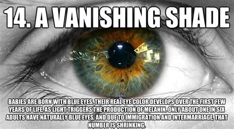 facts about eye color 1000 ideas about eye color facts on eye color