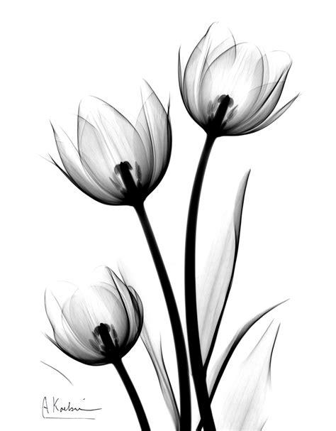 albert koetsier parrot tulips by albert koetsier susan spiritus gallery