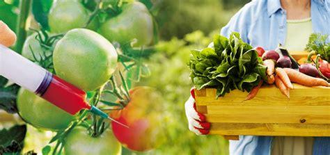 ventajas de los alimentos organicos frente  los transgenicos