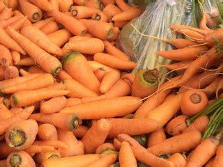 Benih Wortel Unggul pertaniannya musriati teknik budidaya tanaman wortel