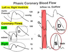 pattern of blood flow quizlet fa physiology cardiovascular flashcards quizlet