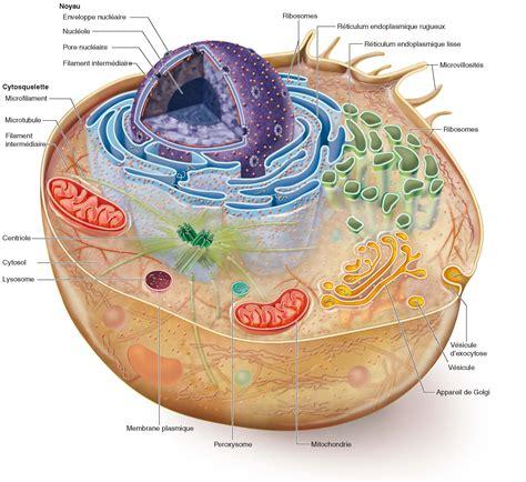 test sulla cellula nouveau service d 233 valuation tests biochimiques