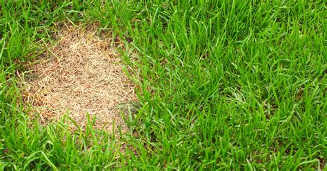 how to overseeding your lawn in spring best manual lawn aerator