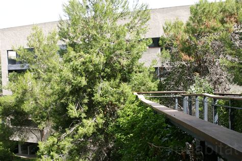thriving student allows fauna and flora to flourish communal in haifa
