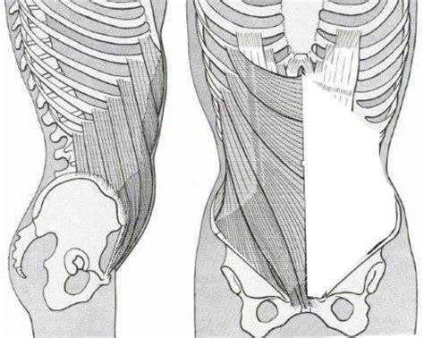 muscolo obliquo interno addominali ecco gli esercizi giusti 171 consigli dell