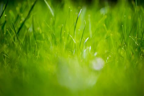 beautiful green grass field hd wallpapers