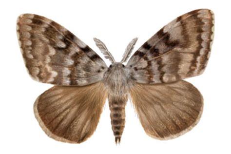imagenes de mariposas nocturnas pitufos y flores mariposas diurnas y nocturnas