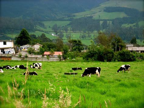 imagenes con movimiento vacas cassandra opitz s blog 183 la hacienda