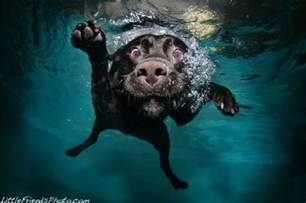 best laptop black friday deals thinkpad underwater dogs the awesomer