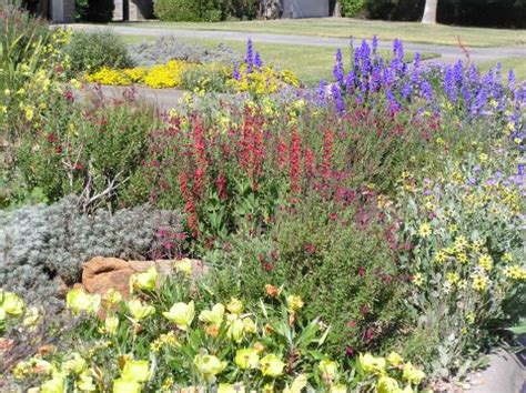 Garten Hohe Pflanzen by Plant List For The Panhandle Flowers High Plains