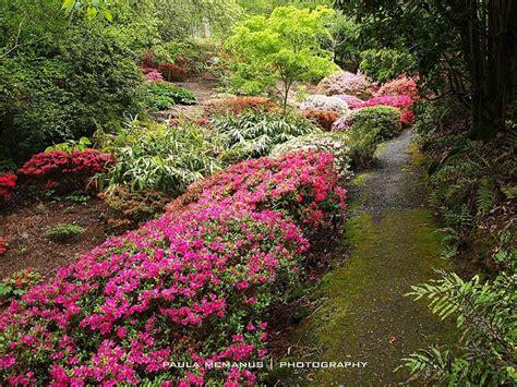 Rhododendron Gully Mt Lofty Botanic Gardens Adelaide Mt Lofty Botanical Gardens