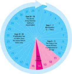 What S A Calendar Ovulation Ovulation Cycle Menstrual Period