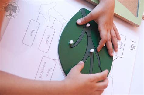 pdf libro inventario ilustrado de los arboles descargar inventario ilustrado de los 193 rboles y los insectos libros montessori friendly creciendo