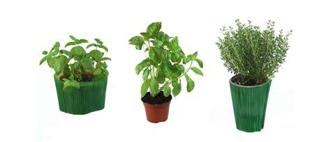 accueil plantes et jardin de ville