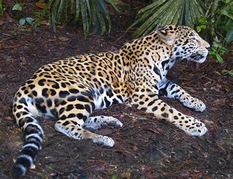 jaguar resort belize jaguar preserve tour green parrot houses and