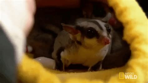 nat geo wild pet gif by the incredible dr. pol find