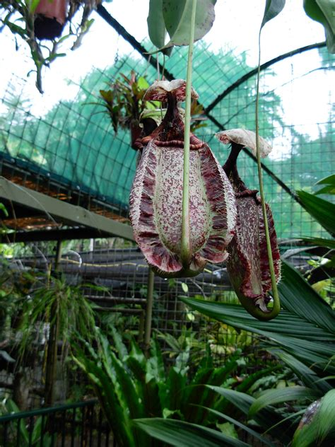 Botanical Garden Cairns Cairns Botanic Gardens Cairns