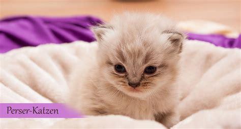 katzen pflanzen fernhalten katzen fernhalten katzen artgerecht vom garten fernhalten