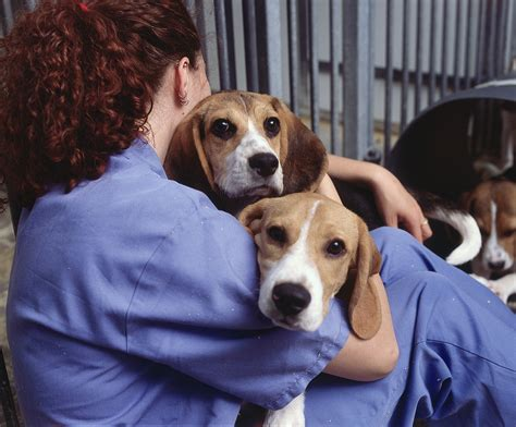 images of dogs facts speaking of research