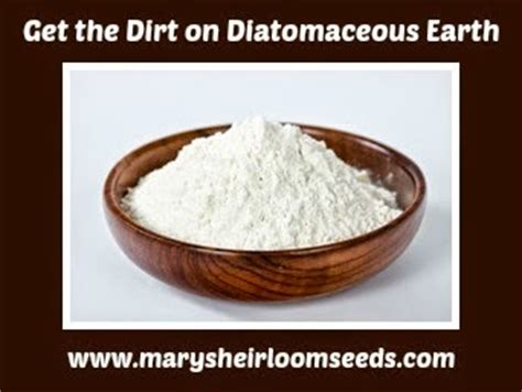 Diatomaceous Earth Detox For Withdrawal by S Kitchen Detox December Diatomaceous Earth