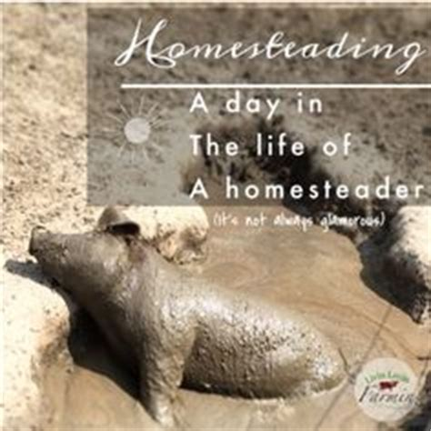 the homestead, homesteads and for kids on pinterest
