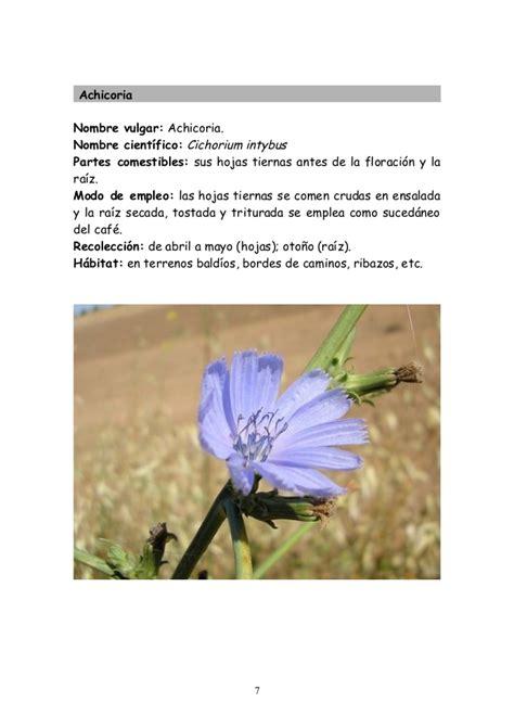 imagenes flores silvestres sus nombres plantas silvestres comestibles