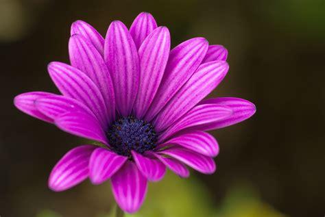 banco de im 193 genes las fotos m 225 s hermosas de rosas de imgenes de flores en alta resolucin banco de im 225