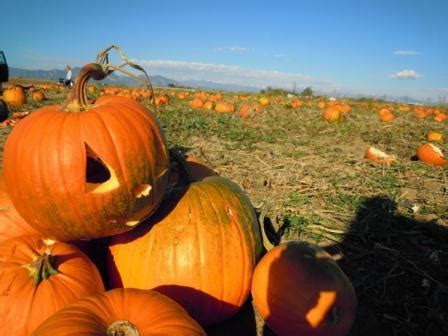 sat. oct. 26th crafts under the oaks: pumpkin carving