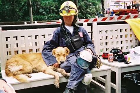 amica golden retrievers auguri bretagne ultimo eroe dell 11 9 the horsemoon post