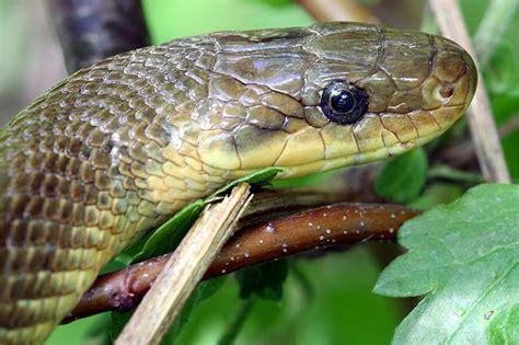 schlangen im garten artenportr 228 t blindschleiche nabu