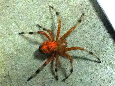 pumpkin spider probably pumpkin spider what s that bug