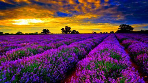 wallpaper hd widescreen high quality desktop flower wallpaper hd widescreen high quality desktop flower pics