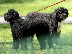white house dogs bo and sunny the daily treat bo sunny are the mvps of the white house easter egg roll la remix