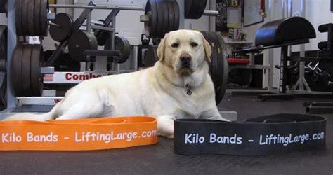 Sale Valeo Knee Wraps Fitness Squat Deadlift Wrap Support resistance exercise bands