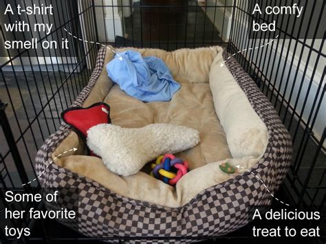 what to put in puppy crate at your s crate feel like home cratehappypets ad petsmart