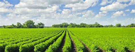 organics  conventional comparing costs benefits