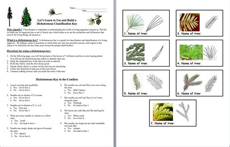 Taxonomy Classification And Dichotomous Worksheet Answers by Brown Science Teaching Classification And Taxonomy