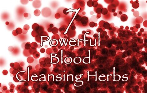Herbs For Blood Detox by 7 Powerful Blood Cleansing Herbs Healthy Focus