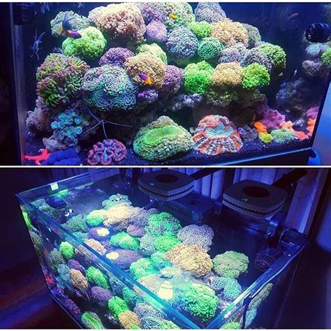saltwater aquascaping ideas 17 best ideas about reef aquascaping on pinterest reef