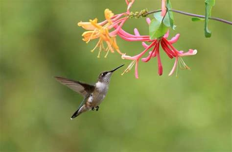 Pictures Of Hummingbirds Sleeping