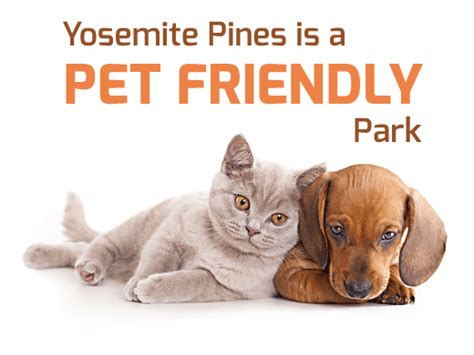 are dogs allowed in yosemite yosemite pet friendly cabins cgrounds rv resort
